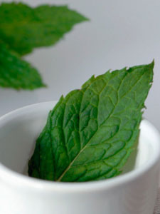 Freshly Picked Peppermint Leaves