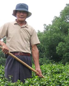 Dragonwell Farmer Yao Fu Yun in Hangzhou, China