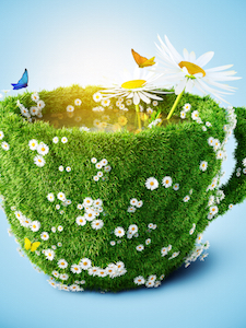 Meadow in a Cup
