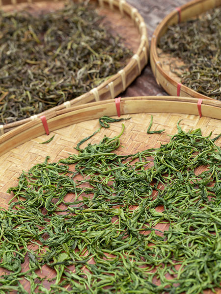 The best green teas are spring harvests